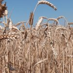 Yield platforms transforming the landscape